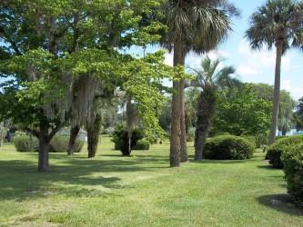 Park of the Palms